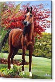 Horse Portrait Acrylic Print by Eileen  Fong