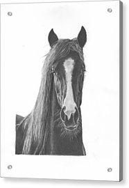 Horse Portrait Acrylic Print by Sue Olson
