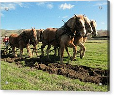 Acrylic Print featuring the photograph Horse Power by Jeff Swan