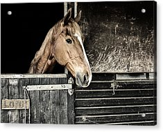 Acrylic Print featuring the photograph Horse Profile In The Stable by Marion McCristall