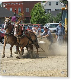 Horse Pull K Acrylic Print by Melissa Parks