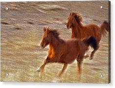 Horse Race Acrylic Print by James Steele