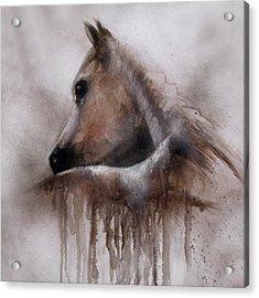 Horse Shy Acrylic Print