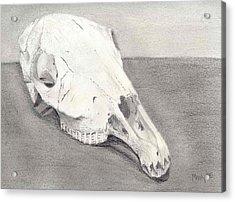 Horse Skull Acrylic Print by Mendy Pedersen