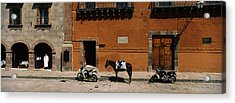 Horse Standing Between Two Motorcycles Acrylic Print by Panoramic Images