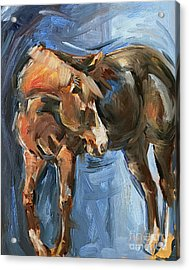 Horse Study In Oil  Acrylic Print