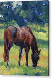 Horse Study No.40 Acrylic Print by Tracy Wall