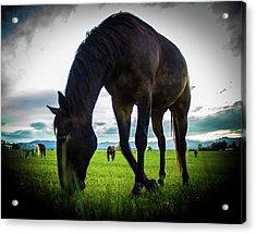 Horse Time Acrylic Print