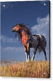 Horse With War Paint Acrylic Print by Daniel Eskridge
