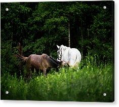Horses 2 Acrylic Print by Ivan Vukelic