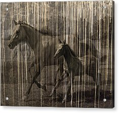Horses Abstract Mare And Foal Acrylic Print by Karla Beatty