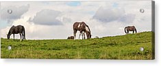 Acrylic Print featuring the photograph Horses And Clouds by D K Wall