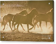 Acrylic Print featuring the photograph Horses And Dust by Ana V Ramirez