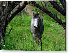 Horse's Arch Acrylic Print