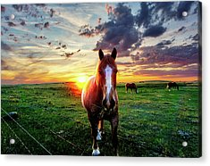 Horses At Sunset Acrylic Print