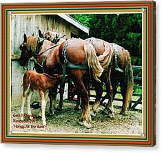 Horses At The Barn H A With Decorative Ornate Printed Frame. Acrylic Print by Gert J Rheeders