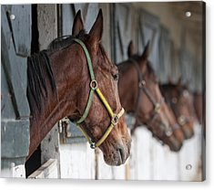 Horses For Sale Acrylic Print by Brian Mollenkopf