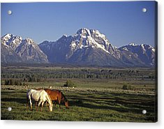 Horses Graze At Lost Creek Ranch Acrylic Print by Richard Nowitz