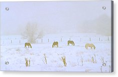 Horses Grazing In A Field Of Snow And Fog Acrylic Print by Steve Ohlsen