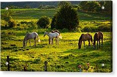Horses Grazing In Evening Light Acrylic Print