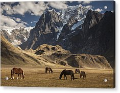 Horses Grazing Under Siula Grande Acrylic Print by Colin Monteath