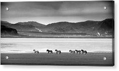 Horses, Iceland Acrylic Print