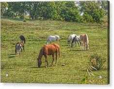 1003 - Horses In A Pasture I Acrylic Print