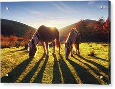 Horses In Austigarmin Acrylic Print