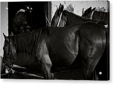 Horses In Mexico Acrylic Print by Dane Strom