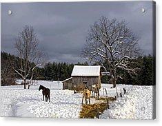 Horses In Snow Acrylic Print
