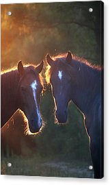 Horses In The Early Morning Acrylic Print by Lorella  Schoales