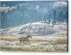Horses In The Frost Acrylic Print by Keith Boone