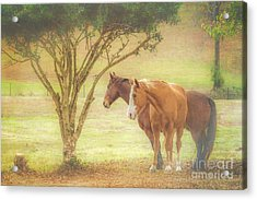 Horses In The Meadow Acrylic Print