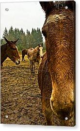 Horses In The Rain Acrylic Print by Dale Stillman