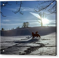 Horses In The Snow Acrylic Print by Greg Reed