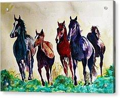 Horses In Wild Acrylic Print
