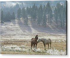 Horses On A Montana Ranch Acrylic Print