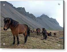Acrylic Print featuring the photograph Horses Near Vestrahorn Mountain, Iceland by Dubi Roman