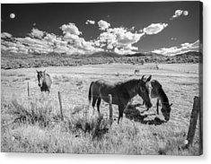 Horses Of San Juan Acrylic Print by Jon Glaser