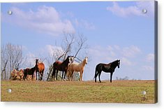 Acrylic Print featuring the photograph Horses On The Hill by Bonnie Willis