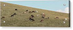 Acrylic Print featuring the photograph Horses On The Hill by D K Wall