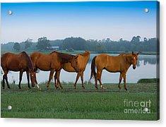 Horses On The Walk Acrylic Print