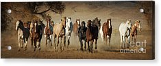 Horses Running Free Acrylic Print by Heather Swan