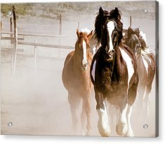 Acrylic Print featuring the digital art Horses Running Into A Dusty Ranch Corral by Nadja Rider
