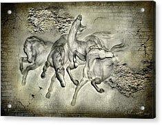 Horses Acrylic Print by Svetlana Sewell