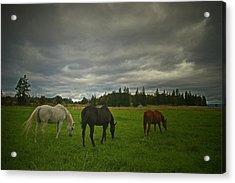 Horses Under Heavy Sky Acrylic Print