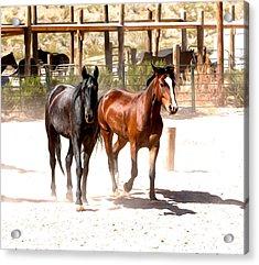 Horses Unlimited_6a Acrylic Print