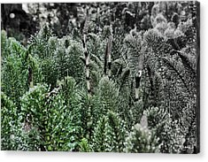 Horsetail Dewpoint Acrylic Print