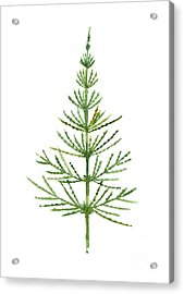 Horsetail Watercolor Green Poster Acrylic Print