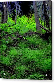 Horsetails Acrylic Print by Anne Havard